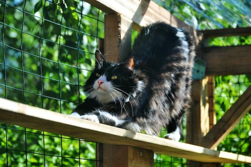 Enclos pour chat exterieur